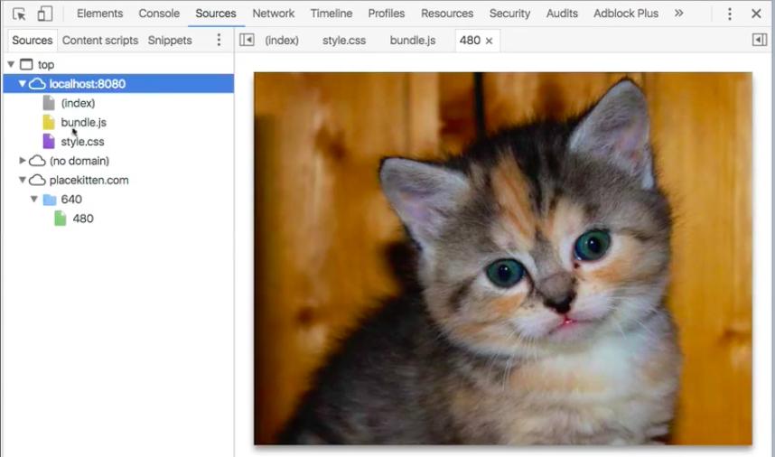 Kitten Placeholder